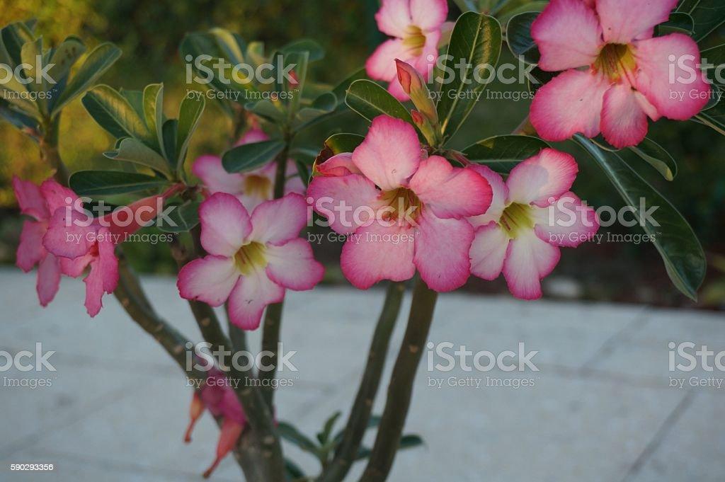 pink flower bloom Стоковые фото Стоковая фотография