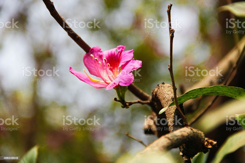 pink flower blooms royalty-free stock photo