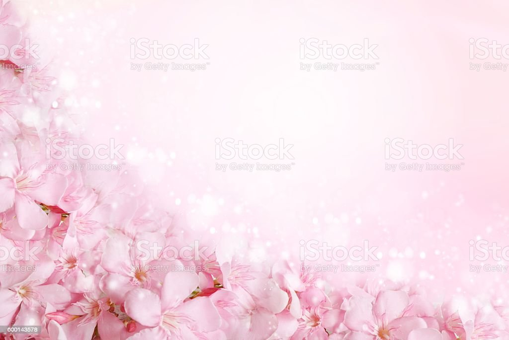 Pink Flower Frame In Soft Vintage Tone Background Royalty Free Stock Photo
