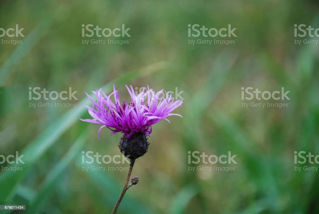 Pink flower head stock photo