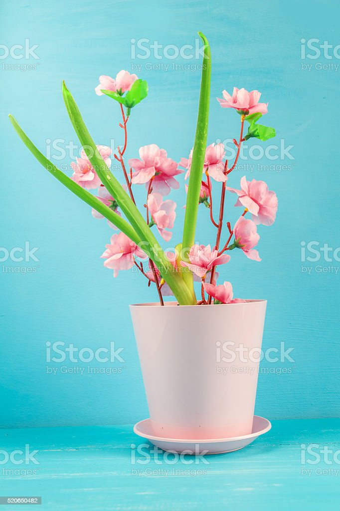 Pink flower in a pot. stock photo