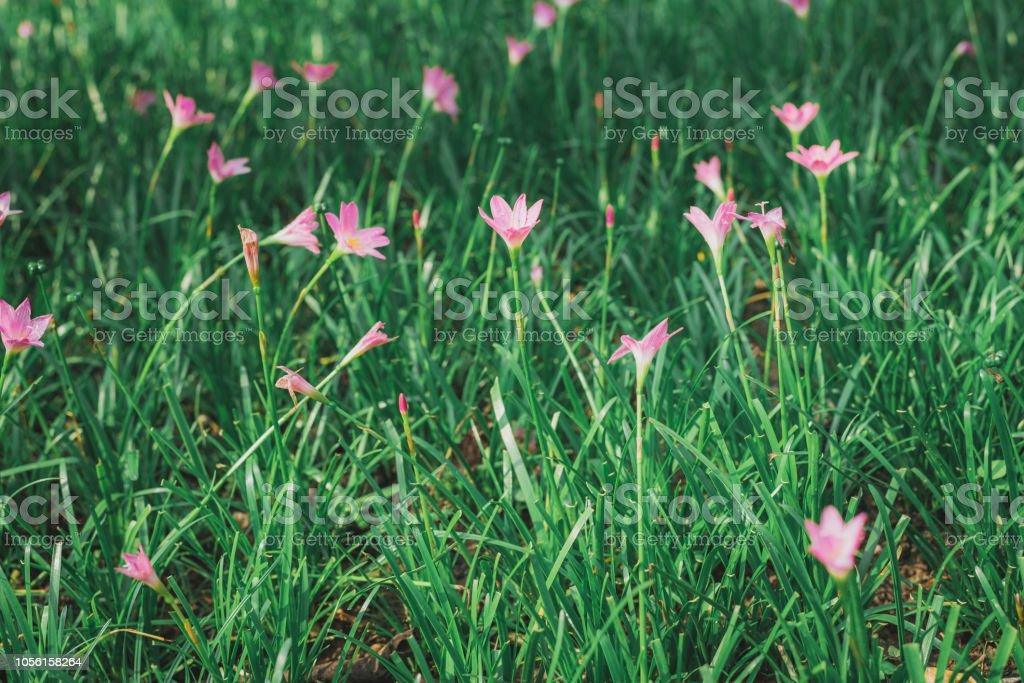 Photo libre de droit de Fleur Rose Dans Ton Jardin Vintage banque d ...