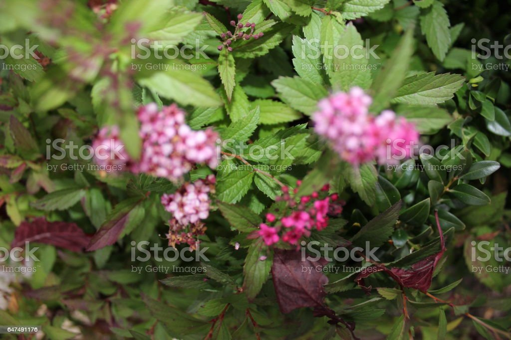 Pink flower in green tree stock photo