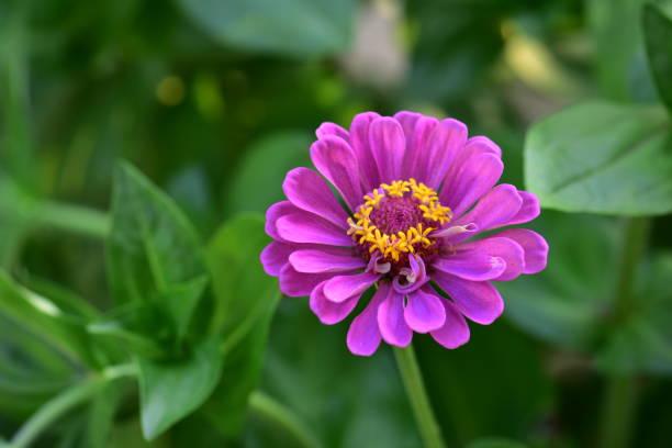 Rosa Blume im Garten – Foto