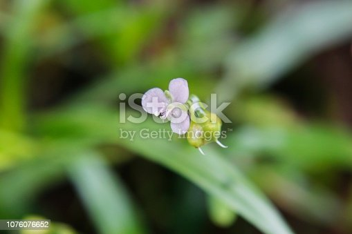 istock Pink  flower in the nature with defocused background and copy space 1076076652