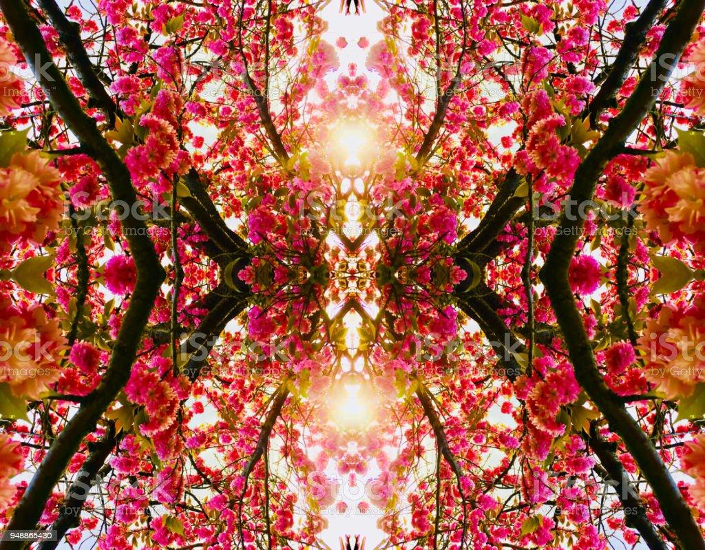 Rosa Blume Natur Kaleidoskop – Foto