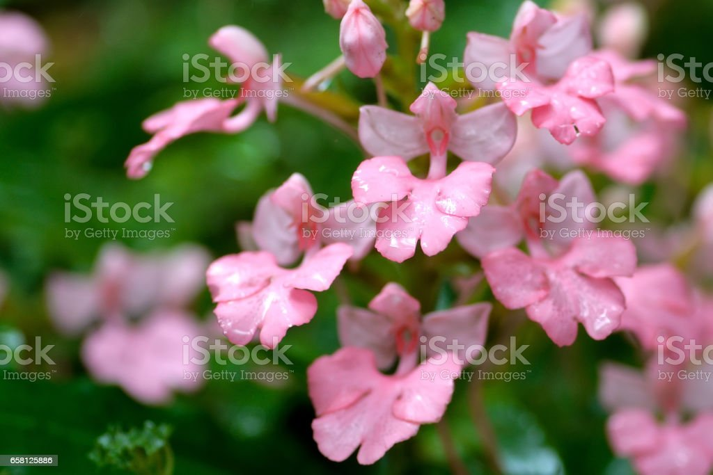 pink flower near water fall royalty-free stock photo