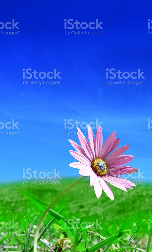 Pink Flower on Green Grass royalty-free stock photo
