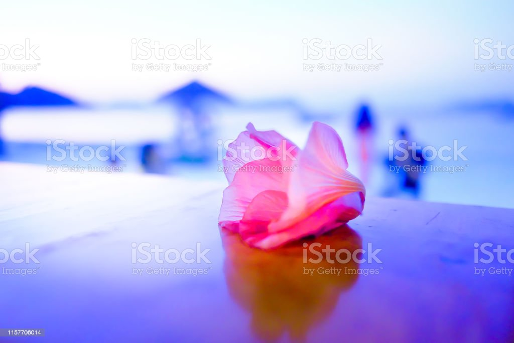 Pink Flower on the wood table at the beach with a shallow depth of...