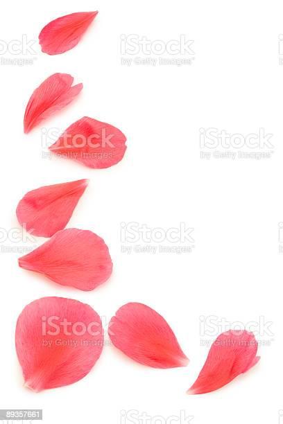 Pink flower petals on a white background picture id89357661?b=1&k=6&m=89357661&s=612x612&h=ddawork8xswbf9uiedpj2wwn4cvxcxpkonrq5li8kic=