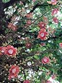 Red apple on appletree\nPhoto taken outdoors in late summer