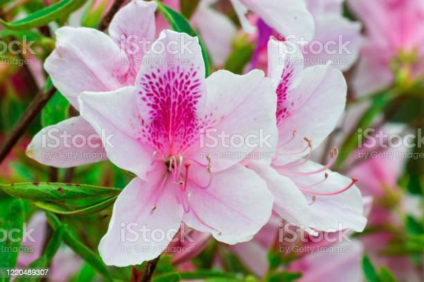 Photo of Pink flower
