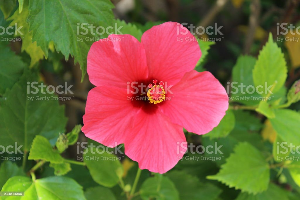 Pink flower stock photo