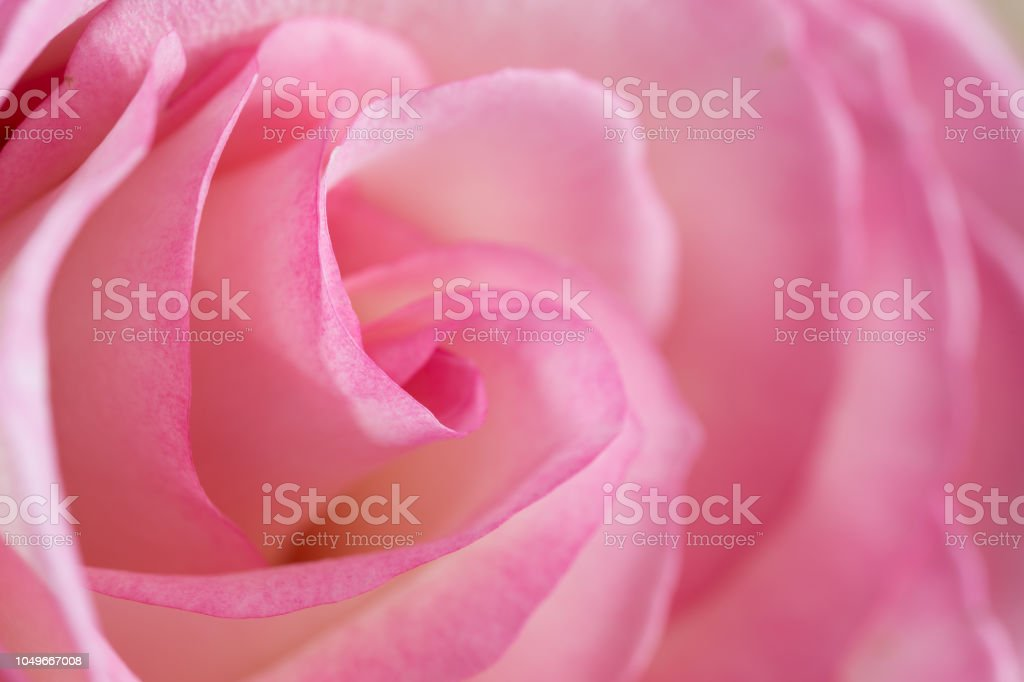 Royalty Free Fleur Blanche Pictures Images And Stock Photos Istock