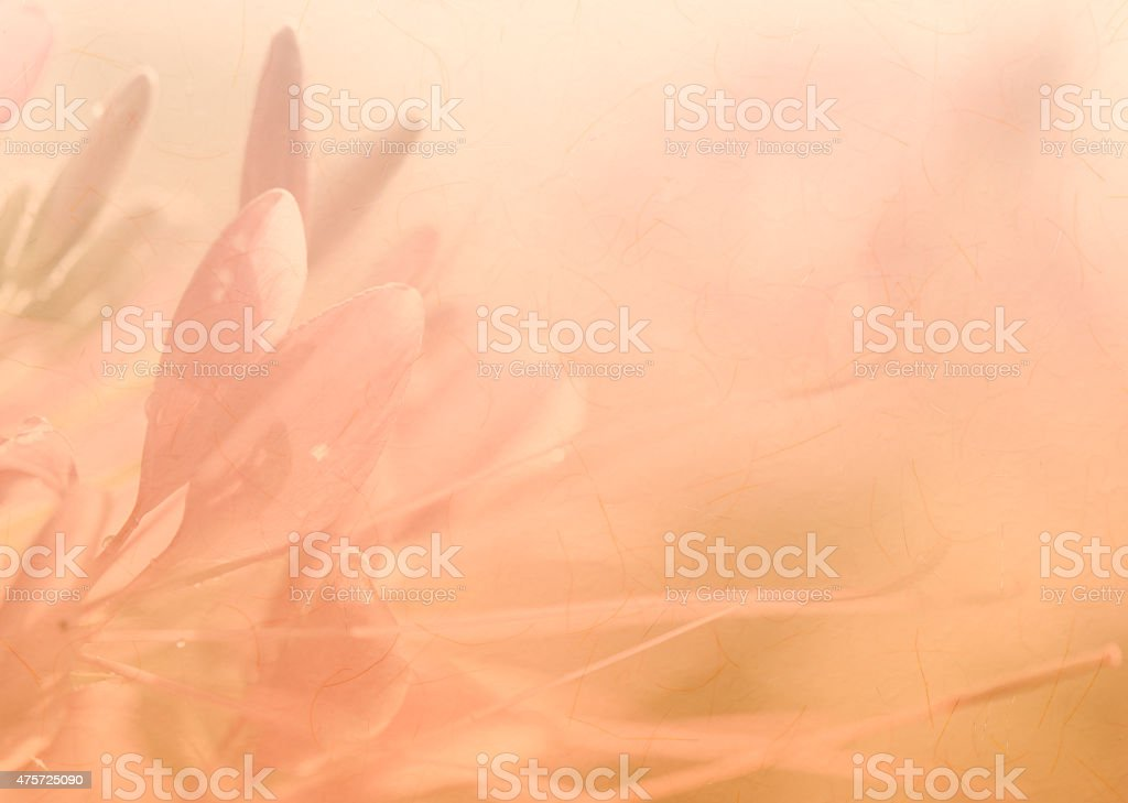 Rosa flor suave fondo - foto de stock