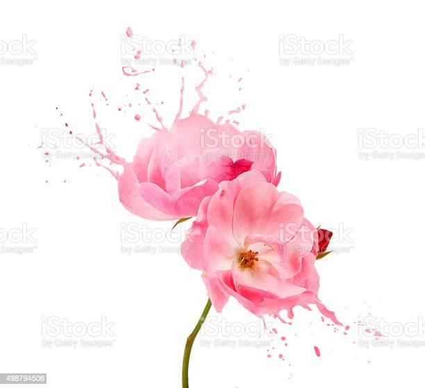 Pink flower splashes picture id498794506?b=1&k=6&m=498794506&s=612x612&h=bmeoxfx7ou4lgdpipsk1zoilkjyana9o4j86vv3j8sa=