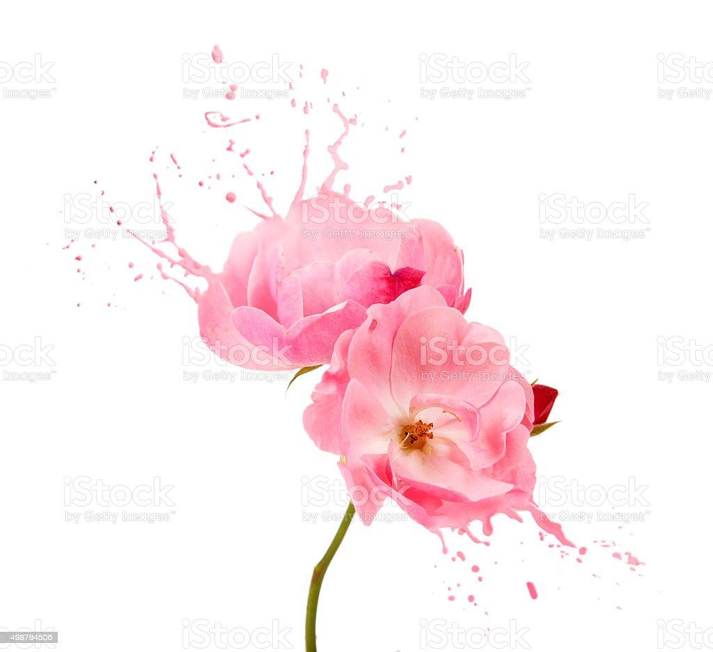 pink flower splashes stock photo