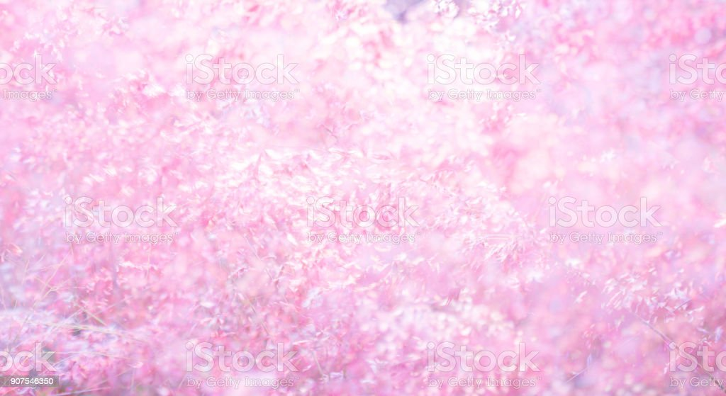 Pink flower (Melinis repens) texture background for valentine's day stock photo