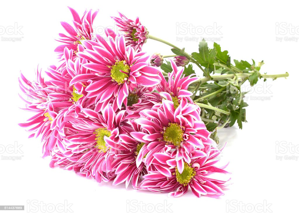 Pink Flower With Long Thin Petals A Yellow Center Stock Photo More