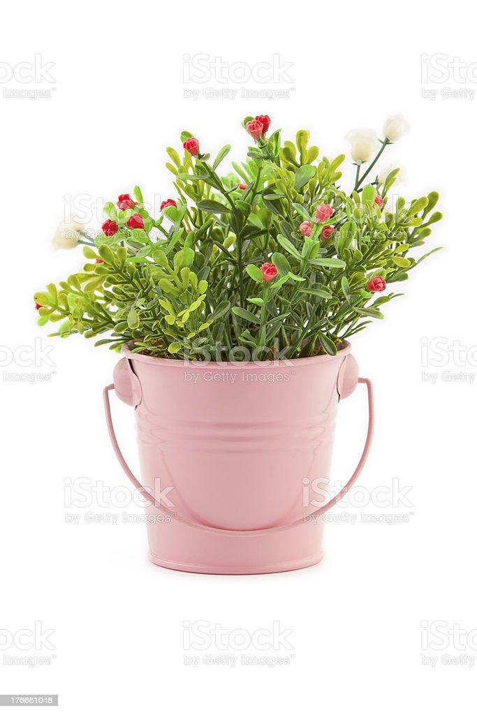 Rosa flowerpot foto de stock libre de derechos