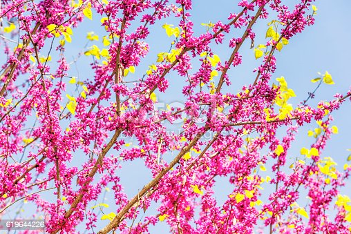 istock Pink flowers against blue sky 619644226