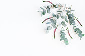 istock Pink flowers and eucalyptus branches. Flat lay, top view 818284016