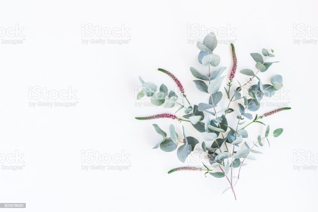 Pink flowers and eucalyptus branches. Flat lay, top view stock photo