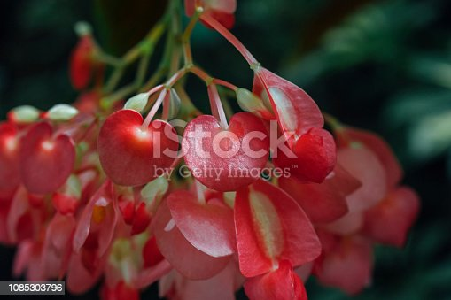 Botanical Garden, Bouquet, Flower, Plant, Seedling