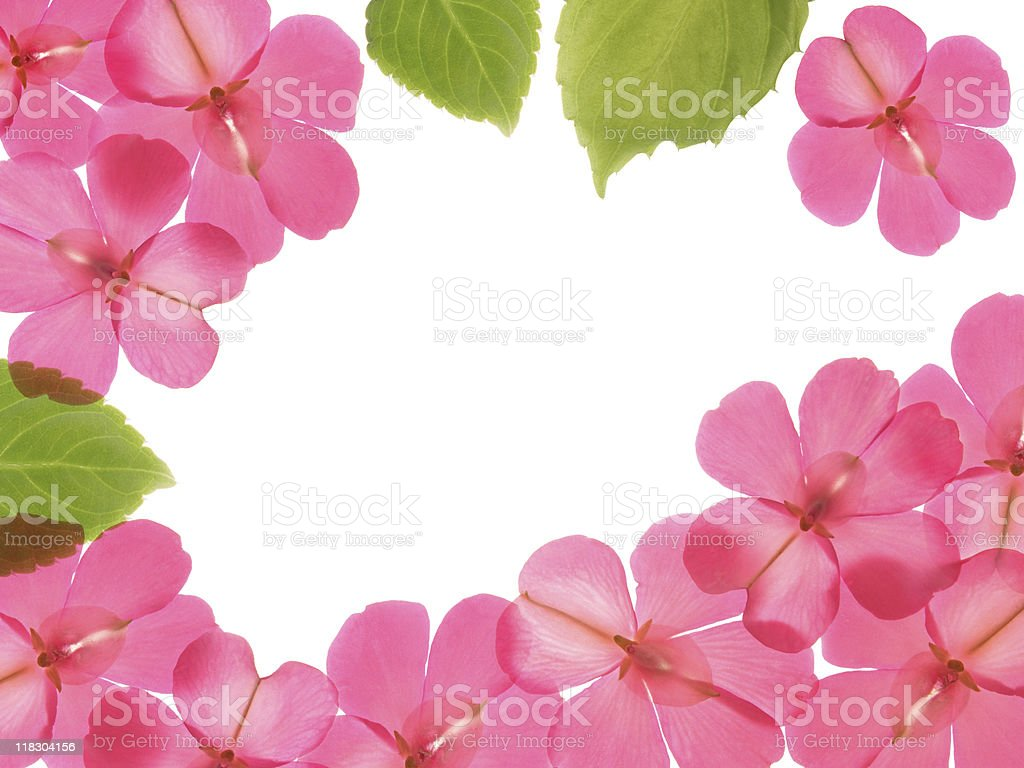 Pink flowers and leaves, frame design stock photo