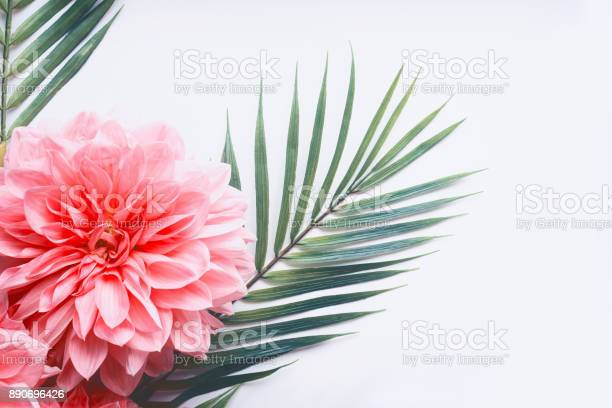 Pink flowers and tropical leaves on on white desktop background top picture id890696426?b=1&k=6&m=890696426&s=612x612&h=vx74p msjluexcih7x0uvt49rmv7ulkcsb1zlfkybng=