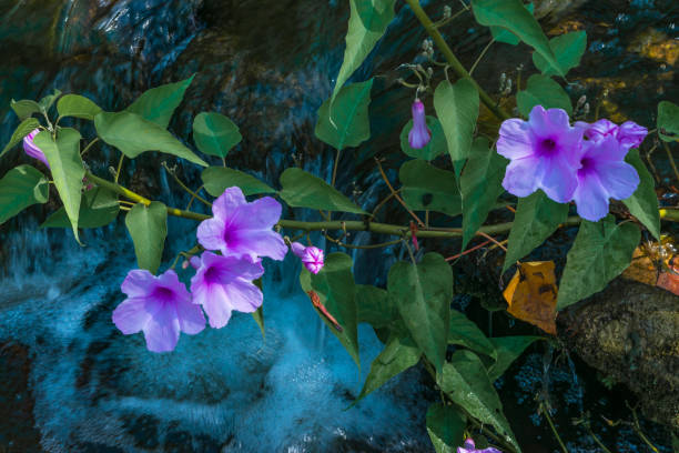 Pink flowers and waterfall stock photo