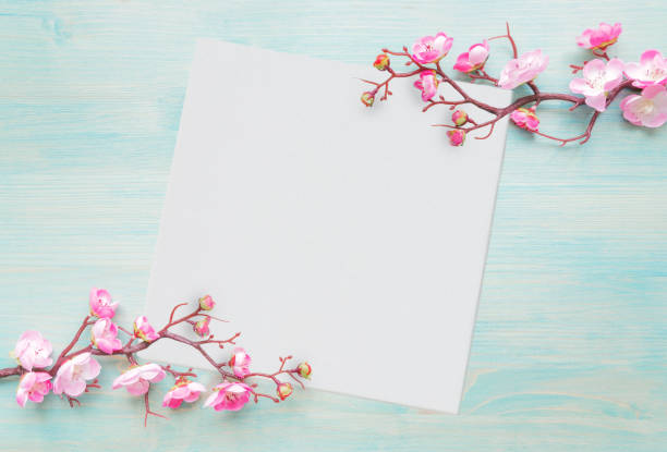 Pink flowers and white paper sheet are on blue wooden background stock photo