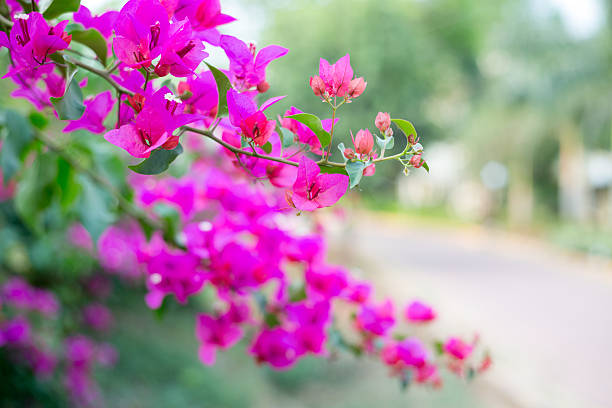 Pink flowers background - Shallow focus depth stock photo