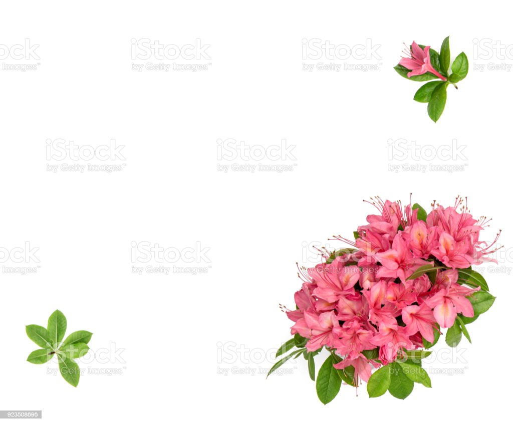 Pink flowers green leaves white background floral flat lay stock pink flowers green leaves white background floral flat lay royalty free stock photo mightylinksfo