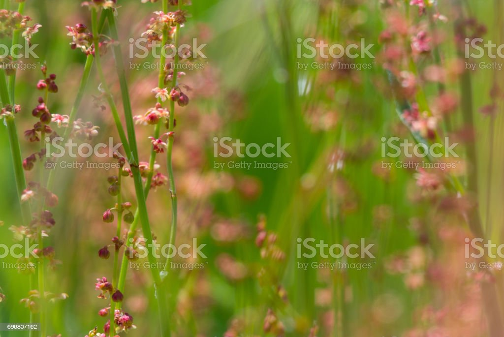 Pink Flowers in a Green Field stock photo