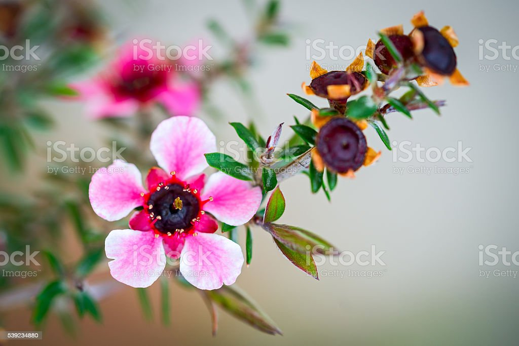 Pink Flowers In Garden. royalty-free stock photo