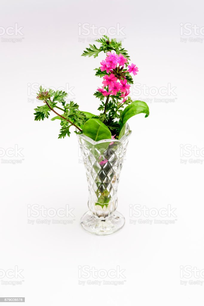 Pink flowers in glass vase stock photo