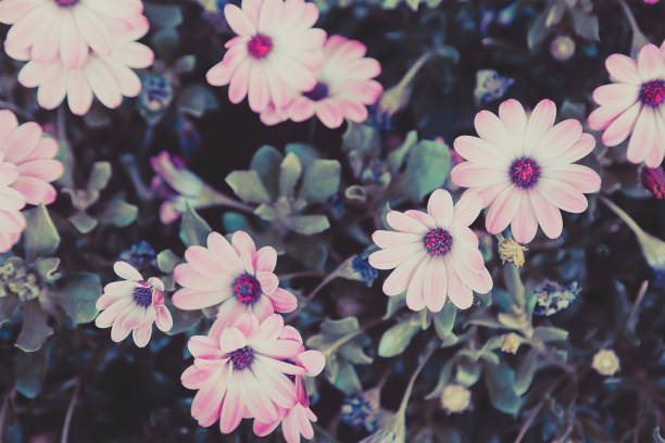 pink flowers in retro style - low contrast stock pictures, royalty-free photos & images