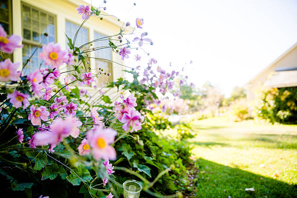 pink flowers in the garden - house with flowers stock photos and pictures