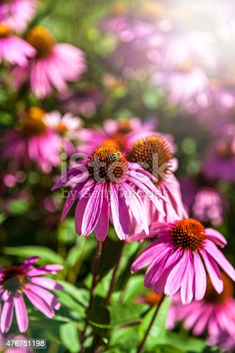 Pink flowers on a background of flowers and green grass.