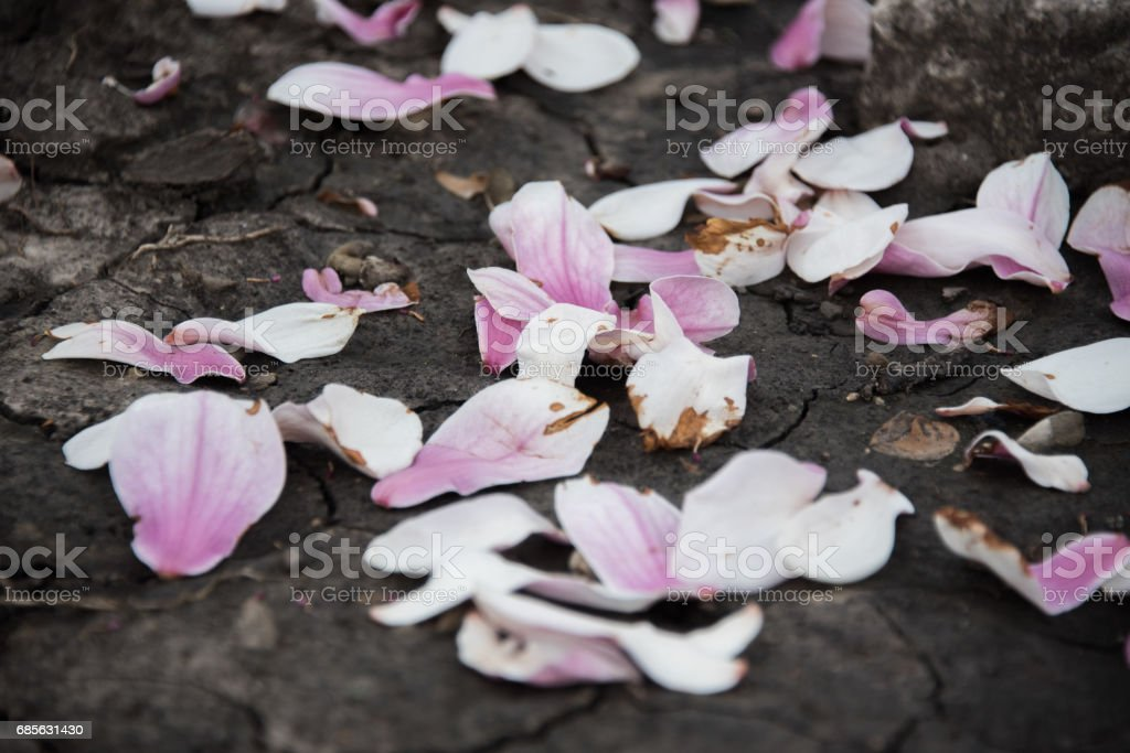 Pink flowers on a ground royalty-free stock photo