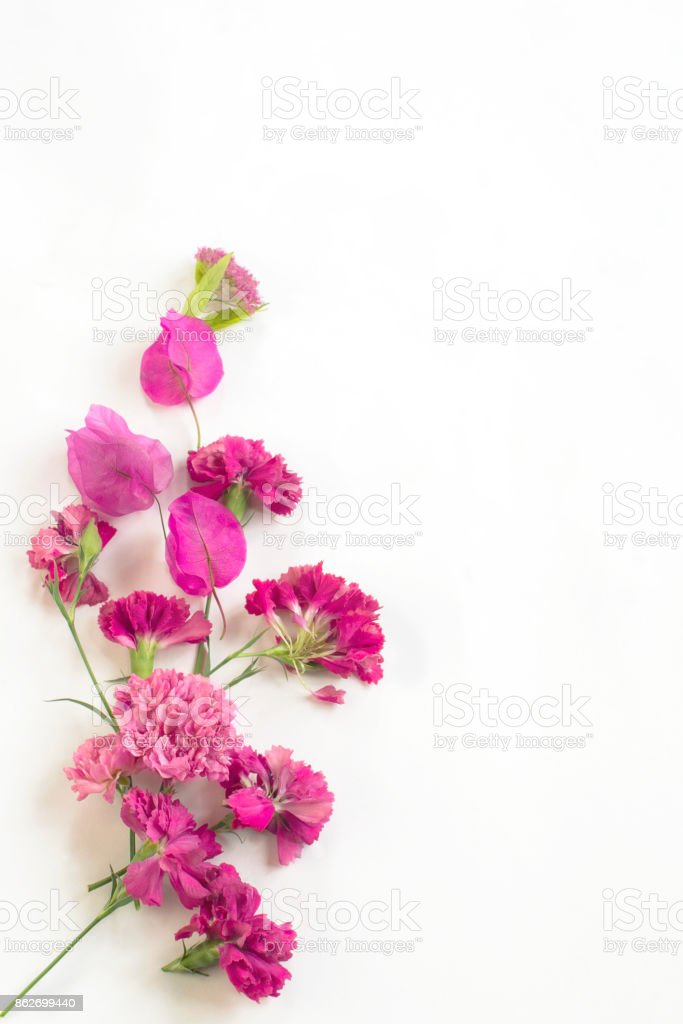pink flowers on a white background stock photo