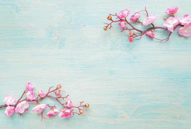 Pink flowers on blue wooden background stock photo