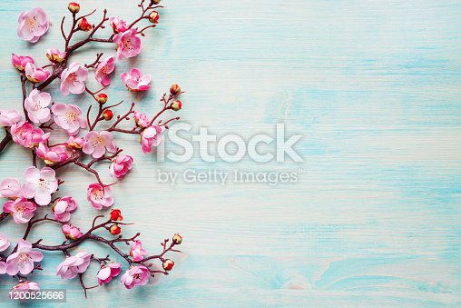 Abstract spring background of painted blue board with branch of flowering cherry branch covered with pink flowers
