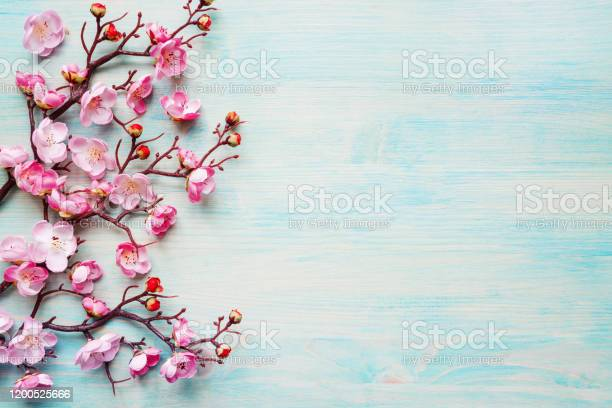 Pink flowers on blue wooden background picture id1200525666?b=1&k=6&m=1200525666&s=612x612&h=dntstmsq9oqg 1 dm2gfc8 8e7ktd aojwddc4y42q0=