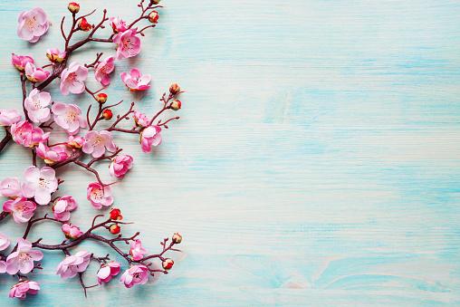 Pink Flowers On Blue Wooden Background — стоковые фотографии и другие картинки Весна - iStock