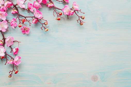 Spring background of painted blue board with branch of flowering cherry branch covered with pink flowers as a border