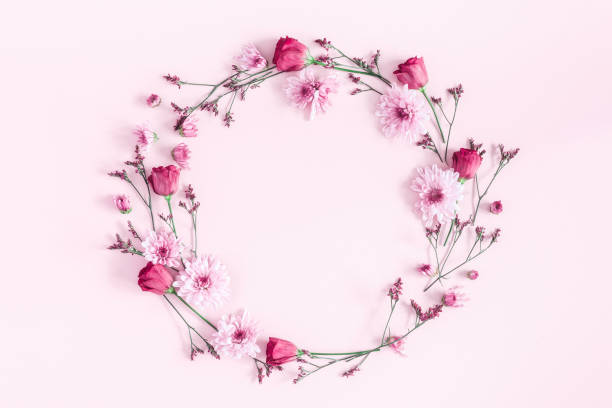Pink flowers on pink background. Flat lay, top view - foto stock