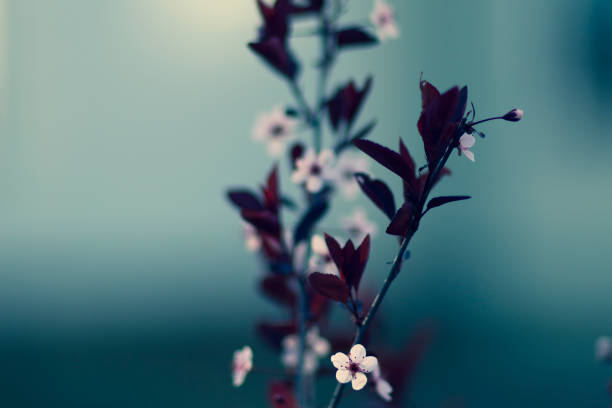Pink Flowers on Stem with Dark Background stock photo