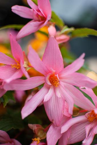발코니에 핑크 꽃 0명에 대한 스톡 사진 및 기타 이미지